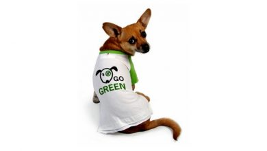 Photo of How to be an eco-friendly pet owner, love your dog AND the environment