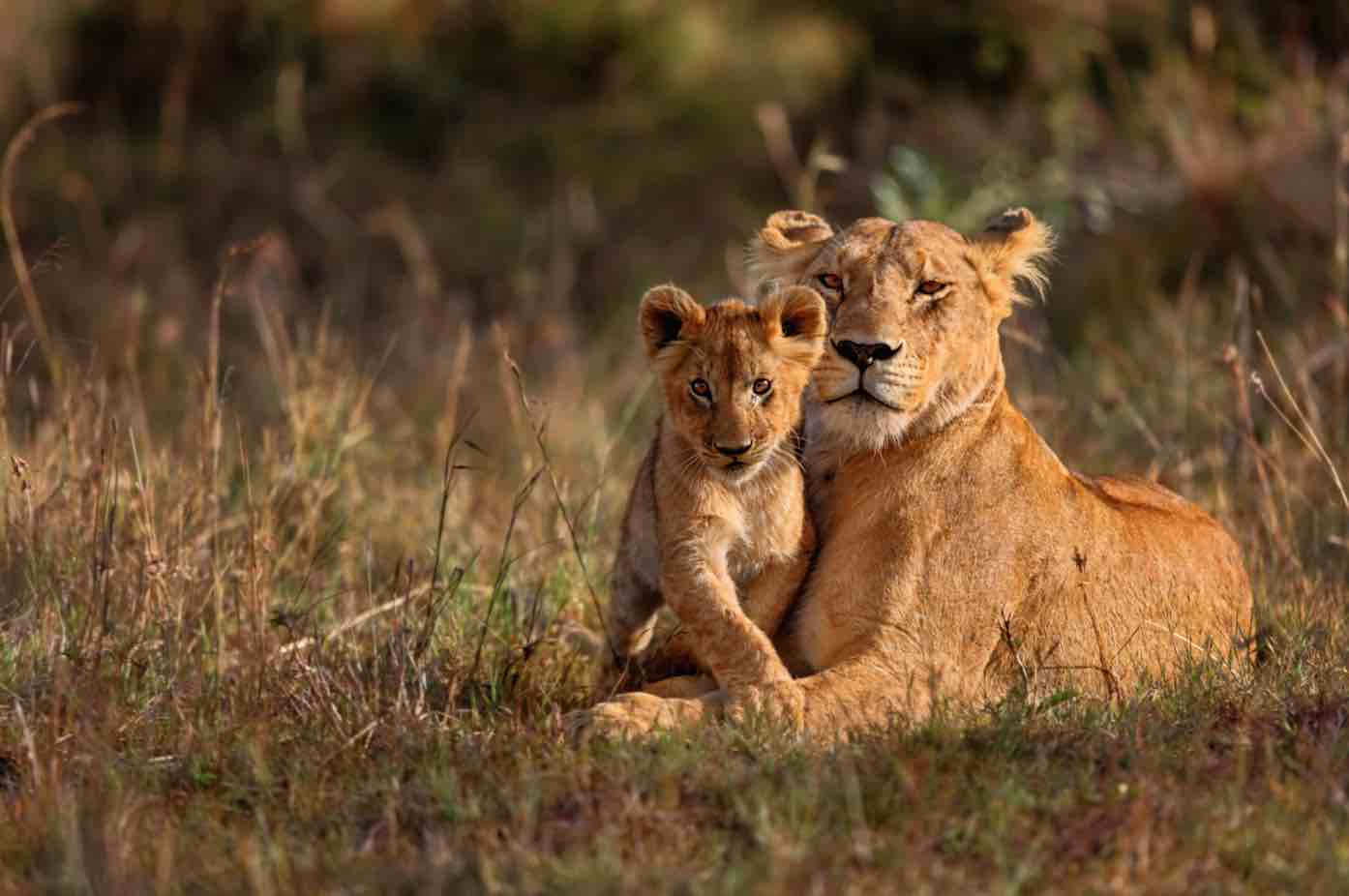 ecotourism sustainable travel jumbari family safaris africa