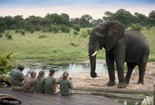 Children family safari africa jumbari wildlife guided tour elephants