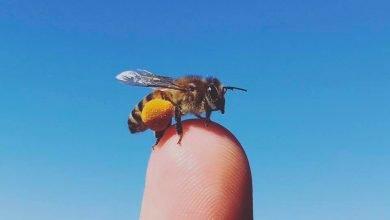 beekeeping educational program girl next door honey